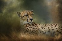 Napping In The Brush Fine-Art Print