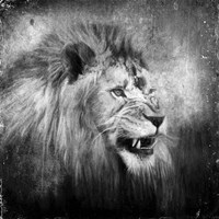 Snarling In Black And White Fine-Art Print