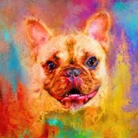 Jazzy French Bulldog Fine-Art Print