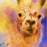 Jazzy Llama Fine-Art Print