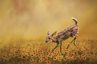 Romping In The Sunflower Field Fine-Art Print