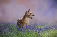 Twin Fawns In The Lavender Fine-Art Print