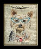 Yorkshire Terrier Fine-Art Print