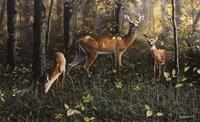 Emerald Forest Fine-Art Print