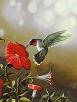 Ruby Throated Hummingbird Fine-Art Print
