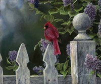 Birds Eye View Fine-Art Print