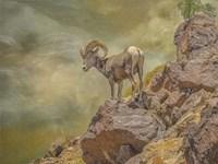 Browns Bighorn Fine-Art Print