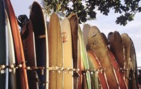 Long Boards Waikiki Fine-Art Print