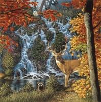 Afternoon At Sanctuary Falls Fine-Art Print