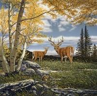 Woodland Meadows Fine-Art Print