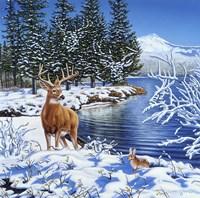 Forest Edge Fine-Art Print