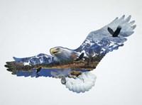 The Eagle Fine-Art Print