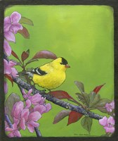 Goldfinch Fine-Art Print