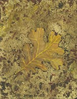 Oak Leaf Fine-Art Print