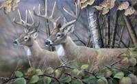 Blackberry Vines White Tail Deer Fine-Art Print