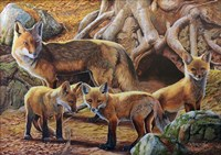 Front Porch Fox Family Fine-Art Print