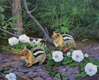 Morning Glory Chipmunks Fine-Art Print