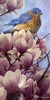 Bluebird Magnolias Fine-Art Print