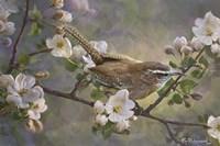 Wren And Apple Blossoms 2 Fine-Art Print