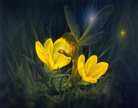 Night Harvest - N Fine-Art Print