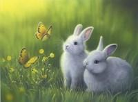 Buttercups Fine-Art Print
