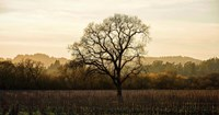 Wine Country Winter Fine-Art Print