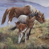 Family Ties the American Mustang Fine-Art Print