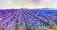 Lavender VI Fine-Art Print