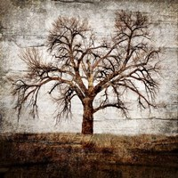 Cottonwood Tree Part 1 Fine-Art Print