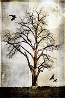 Cottonwood Tree Part 2 Fine-Art Print