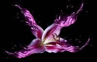 Liquid Lilly Fine-Art Print