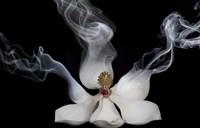 Smoking Magnolia Fine-Art Print