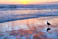 Venice Beach Sunset Fine-Art Print