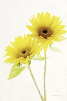 Light and Bright Floral VII Fine-Art Print