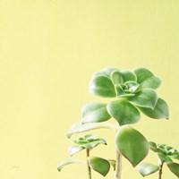 Succulent Simplicity X Fine-Art Print