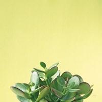 Succulent Simplicity III Fine-Art Print