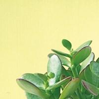 Succulent Simplicity IV Fine-Art Print