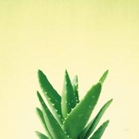 Succulent Simplicity V Fine-Art Print