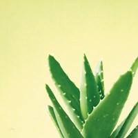 Succulent Simplicity VI Fine-Art Print