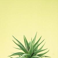 Succulent Simplicity I Fine-Art Print