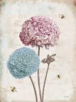 Geranium Study II Pink Flower Fine-Art Print