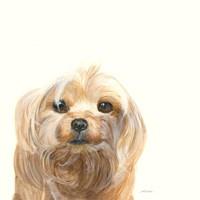 Little Scruff Gizmo Fine-Art Print