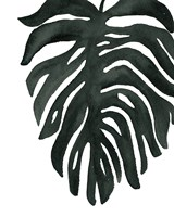 Tropical Palm II BW Fine-Art Print