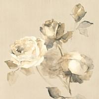 Rose Blossoms Crop Fine-Art Print