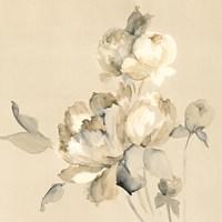 Peony Blossoms Crop Fine-Art Print