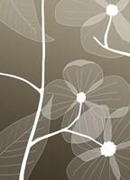 X-ray Flowers - Grey Fine-Art Print