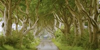 The Dark Hedges, Ireland Fine-Art Print