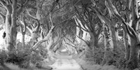 The Dark Hedges, Ireland (BW) Fine-Art Print