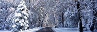 Road passing through Snowy Forest in Winter, Yosemite National Park, California Fine-Art Print