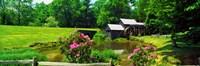 Trees around a Watermill, Mabry Mill, Blue Ridge Parkway, Floyd County, Virginia Fine-Art Print